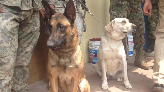 1506029792 235141 1506031186 sumario normal - Frida, a cadela da Marinha mexicana que ajudou no resgate de 56 pessoas
