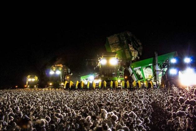 La foto viral de un campo de algodón que se confunde con un festival de música