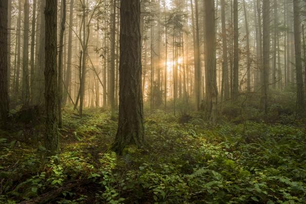 Resultado de imagen para bosque