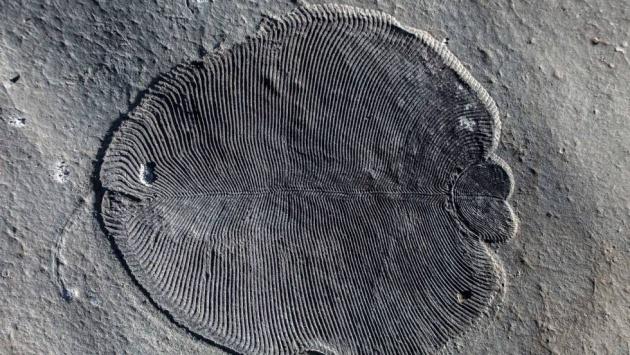 animal más antiguo descubierto en el 2018