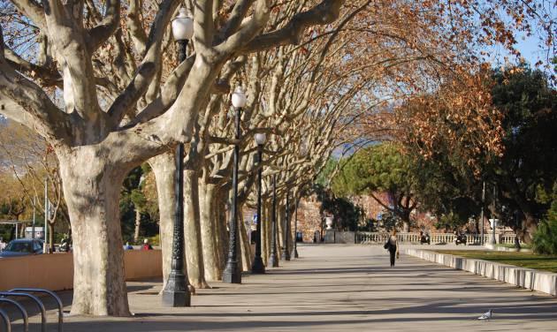 Los doctores de árboles: cómo se cuida y recupera un árbol enfermo